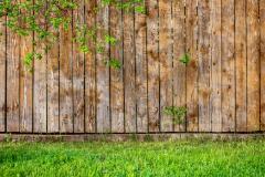 Fresh spring green grass leaf plant over wood fence background